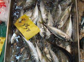 Makrele | Hochgeladen von: tbohlmann