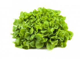 Eichblattsalat, frisch | Hochgeladen von: julifisch