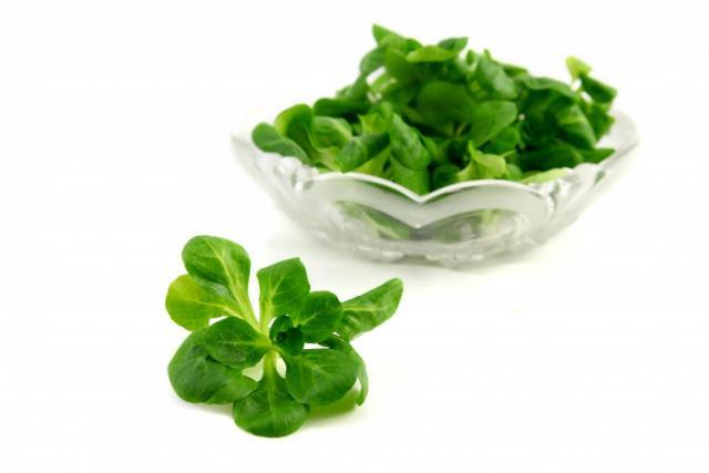 Feldsalat, frisch | Hochgeladen von: julifisch
