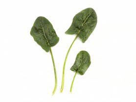 Spinat, frisch | Hochgeladen von: julifisch