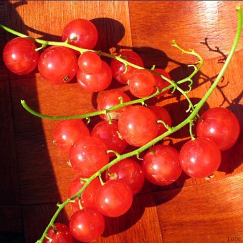 Johannisbeeren, rot | Hochgeladen von: swainn
