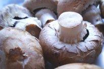 Champignons, braun | Hochgeladen von: JuliFisch