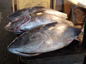 Thunfisch, frisch | Hochgeladen von: tbohlmann