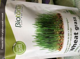 Weizengrassaft, Pulver   Hochgeladen von: beddie0