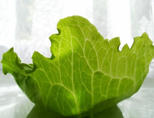 Salat, Eisbergsalat | Hochgeladen von: JuliFisch