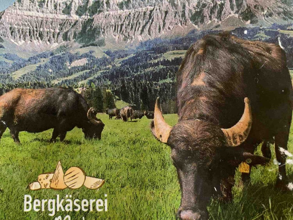 Büffelmozzarella, Büffel von ka.de | Hochgeladen von: ka.de