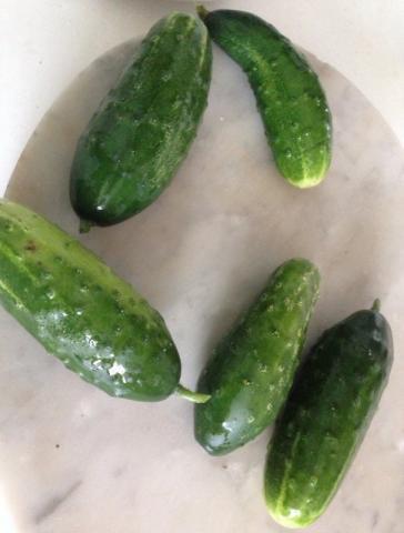 Salatgurke, frisch | Hochgeladen von: Mrs.BeTh