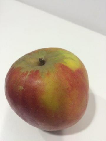 Holsteiner Cox, Apfel   Hochgeladen von: twestphal