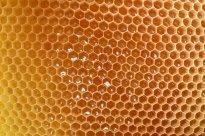 Bienenhonig, Durchschnitt | Hochgeladen von: chaoz