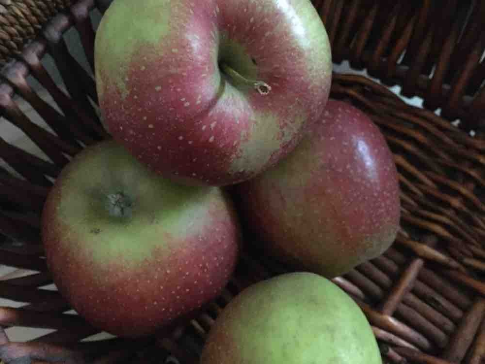 Apfel Wellant  von Aronia61 | Hochgeladen von: Aronia61