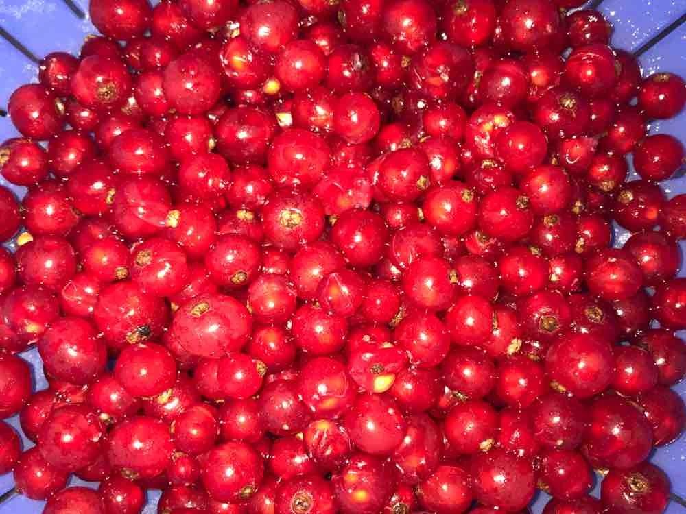 Rote Johannisbeeren von dulimariola2106 | Hochgeladen von: dulimariola2106
